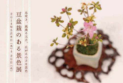 豆盆栽2014DM